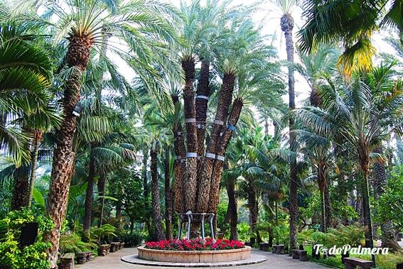 Entradas Jardín Botánico Huerto Del Cura Todo Palmera